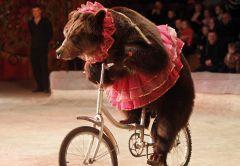 Životinje u cirkusima
