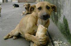 Problem napuštenih životinja