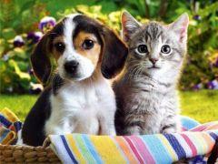 Kućne životinje