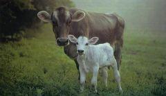 Dah empatije: Filozofija životinjskih prava