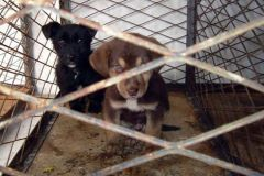 Kako spasiti psa iz kafilerije