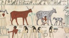 PROČITAJTE: Mleko – simbol vrstne i polne nadmoći